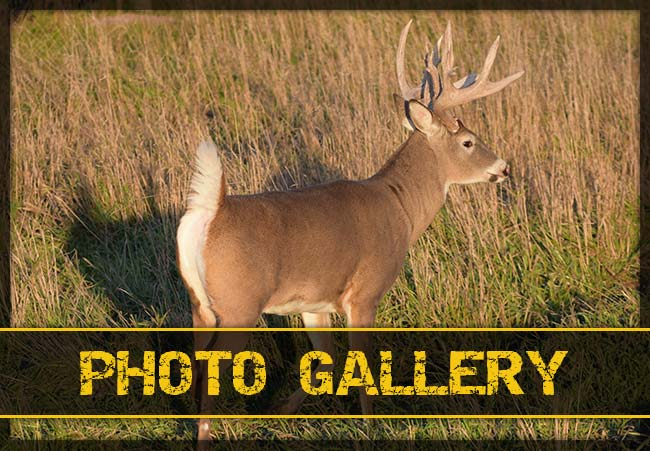 Sodak Prairie Acres Photo Galleries