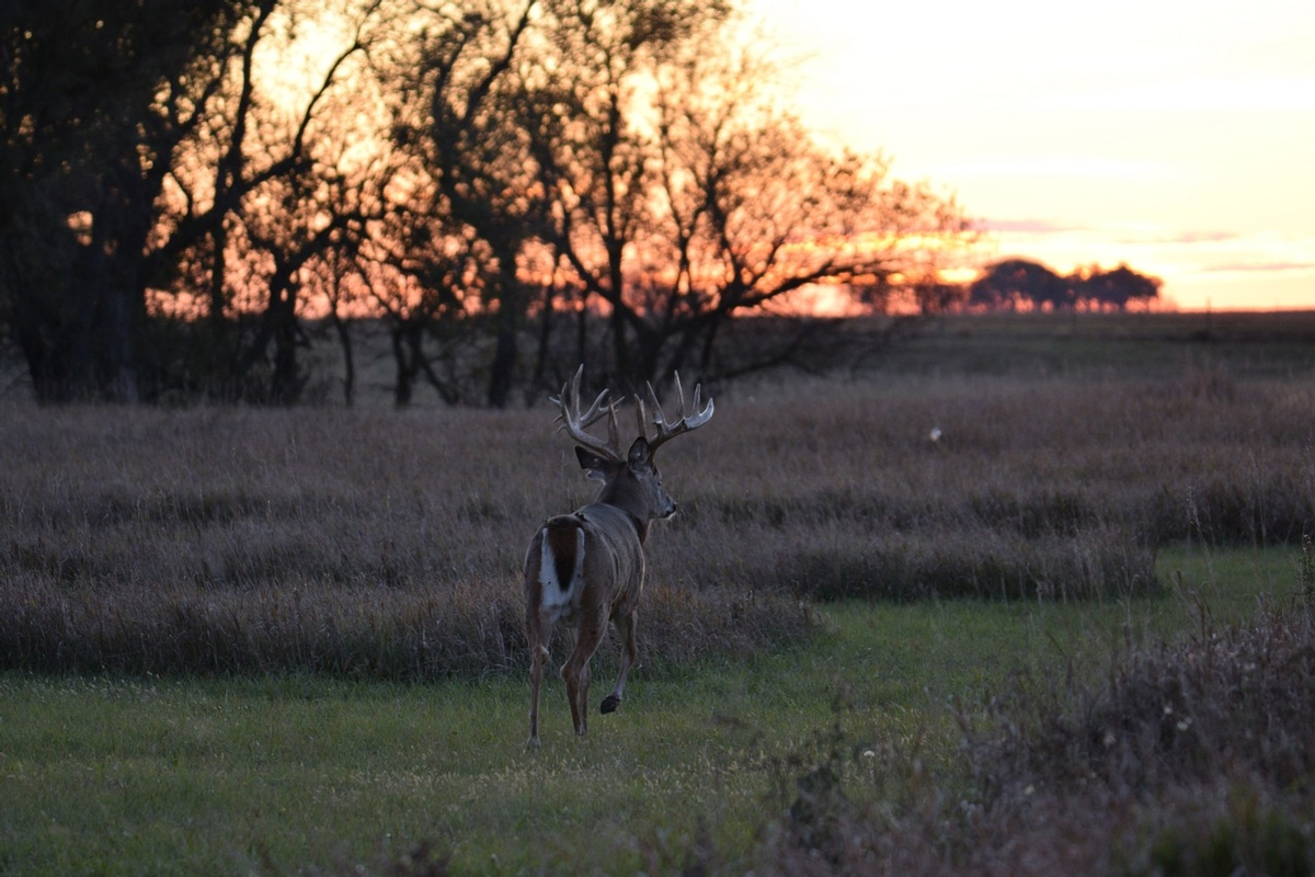 Trophy Whitetail Hunts SD