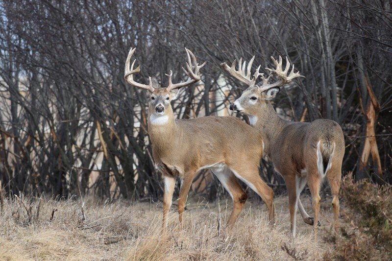 Trophy Hunts South Dakota